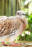 Vogel in de kooi Royalty-vrije Stock Afbeelding