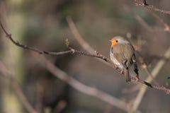 Vogel in de lente stock foto