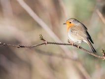 Vogel in de lente stock foto's
