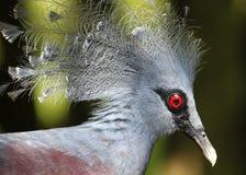 Vogel in de Nationale Dierentuin van Maleisië Royalty-vrije Stock Foto's