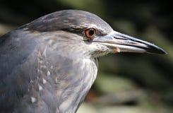 Vogel in de Nationale Dierentuin van Maleisië Stock Foto's