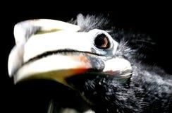 Vogel in de Nationale Dierentuin van Maleisië Stock Afbeeldingen