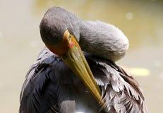Vogel in de Nationale Dierentuin van Maleisië Royalty-vrije Stock Afbeelding