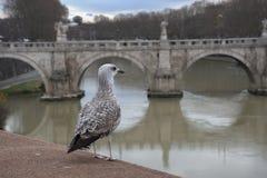 Vogel in de rivier stock foto's