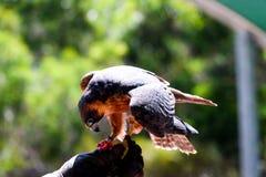 Vogel in de vuist Stock Foto's