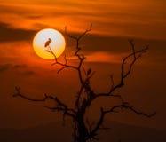 Vogel in de zon Stock Afbeeldingen