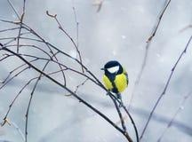 Vogel, den der Vogel auf einer Niederlassung im Winterwald im Schnee sitzen Lizenzfreies Stockfoto