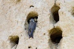 Vogel an den hohlen Fütterungsbabys Lizenzfreie Stockbilder