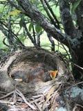 Vogel in den verschiedenen Farben lizenzfreie stockfotos