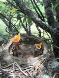Vogel in den verschiedenen Farben stockfotografie