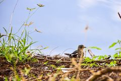 Vogel in den wild lebenden Tieren Lizenzfreie Stockfotos