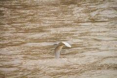 Vogel, der über Fluss fliegt Lizenzfreie Stockbilder