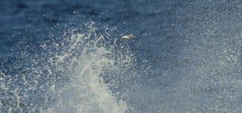 Vogel, der über Ozean fliegt stock video footage