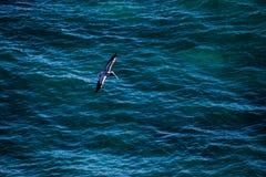 Vogel, der über tiefen blauen Ozean fliegt lizenzfreies stockfoto