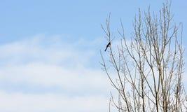 Vogel, der auf Baumasten mit blauem Himmel steht Stockfotografie
