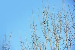 Vogel, der auf Baumasten mit blauem Himmel steht Stockfoto