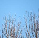 Vogel, der auf Baumasten mit blauem Himmel steht Stockbilder