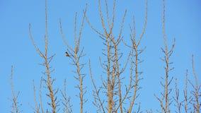 Vogel, der auf Baumasten mit blauem Himmel steht Lizenzfreie Stockfotos