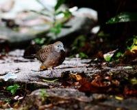 Vogel, der auf dem Boden geht Stockfotografie