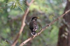 Vogel, der auf dem Stamm eines Baums sitzt Lizenzfreie Stockfotografie