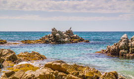 Vogel, der auf den Felsen im Wasser sitzt Lizenzfreie Stockfotografie