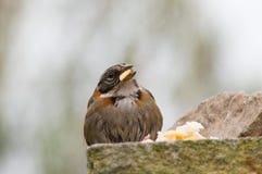 Vogel, der auf den Steinen isst Stockfotos