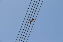 Vogel, der auf Drähten sitzt Stockfoto