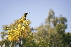 Vogel, der auf einem Baum sitzt Lizenzfreies Stockfoto