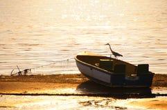 Vogel, der auf einem kleinen Boot in Knysna-Lagune sitzt Stockfotos