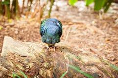 Vogel, der auf einem Klotz steht Lizenzfreies Stockbild