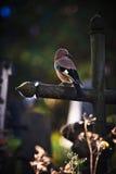 Vogel, der auf einem Kreuz in einem Friedhof sitzt Begriffsbild über e Lizenzfreie Stockfotografie