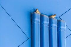 Vogel, der auf einem Rohr sitzt Stockfoto