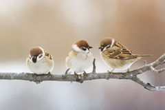 Vogel, der auf einer Niederlassung im Park sitzt und den Abstand untersucht stockfoto