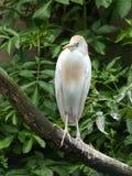 Vogel, der auf einer Niederlassung sitzt Lizenzfreie Stockbilder