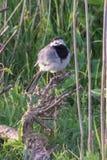 Vogel, der auf einer Niederlassung sitzt Lizenzfreies Stockbild