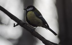 Vogel, der auf einer Niederlassung sitzt stockfoto