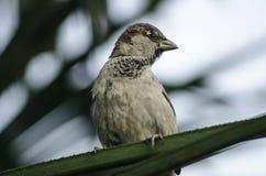 Vogel, der auf einer Niederlassung steht Stockbild