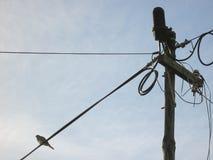 Vogel, der auf einer Stromleitung sitzt Lizenzfreie Stockbilder
