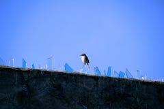 Vogel, der auf Glas steht Stockfotos