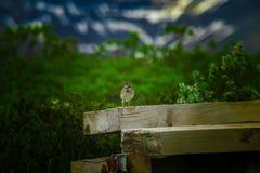 Vogel, der auf Holz, mit Wurm im Mund stillsteht stockfoto