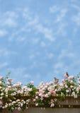 Vogel, der auf schönen blühenden rosafarbenen Blumen sitzt Lizenzfreie Stockfotografie