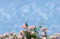 Vogel, der auf schönen blühenden rosafarbenen Blumen sitzt Stockfotografie