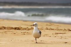 Vogel, der auf seine Mahlzeit wartet Lizenzfreies Stockbild