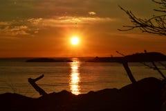 Vogel, der einen bezaubernden Sonnenaufgang des Oberen Sees erforscht Lizenzfreie Stockfotos