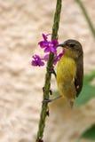 Vogel, der einer Blume anhaftet Lizenzfreies Stockfoto