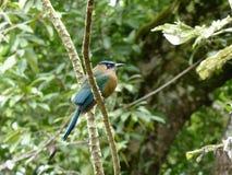 Vogel, der an einer Liane sitzt Lizenzfreies Stockfoto