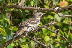 Vogel, der fertig wird, zu lernen, wie man fliegt Stockbilder