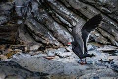 Vogel, der Flug nimmt Stockfotografie