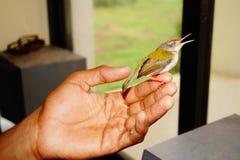 Vogel in der Hand Lizenzfreies Stockfoto