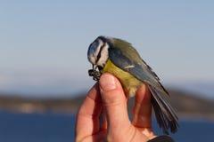 Vogel in der Hand einer Frau für Vogelstreifenbildung Stockbilder